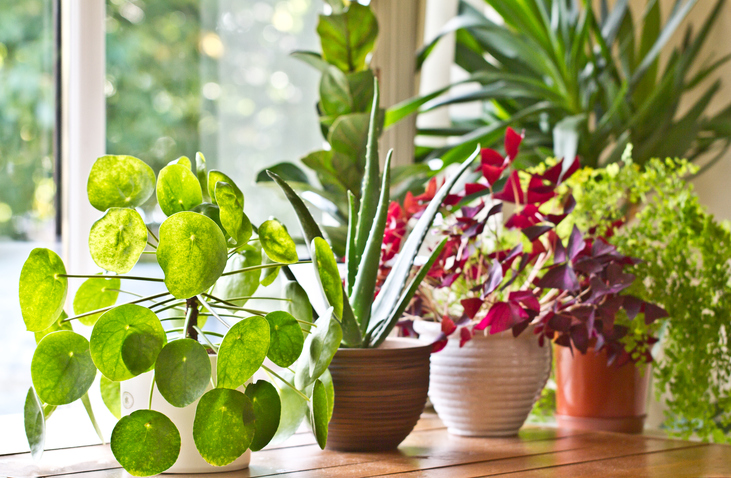Plants that Thrive Well